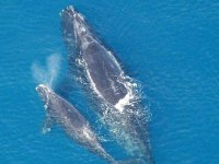 Avistamiento de ballenas en Cabos San Lucas