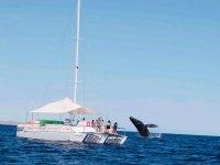 Trimarán para avistamiento de ballenas