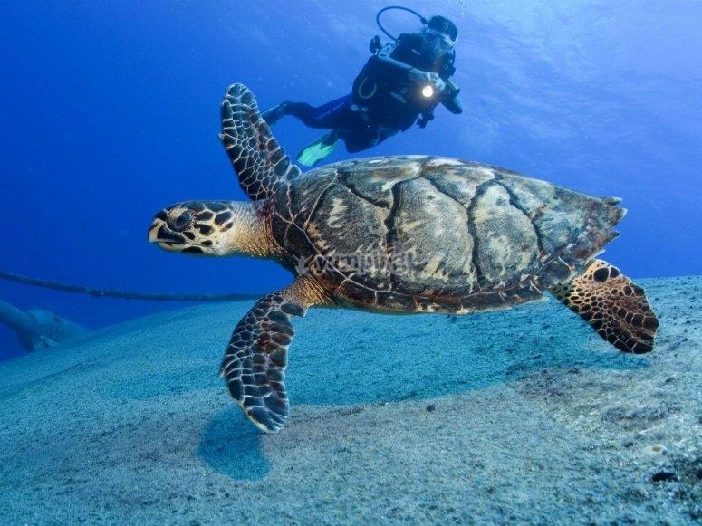 Seeing turtles