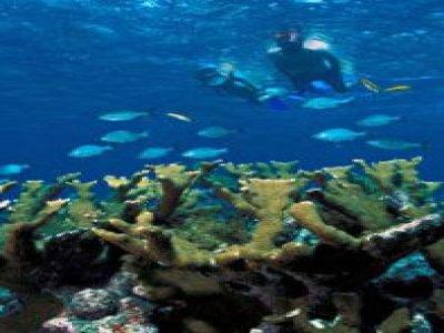 Coral Beach Marina Snorkel