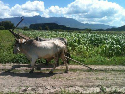 Horseback México Cabalgatas