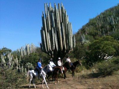 Horseback México Visitas Guiadas