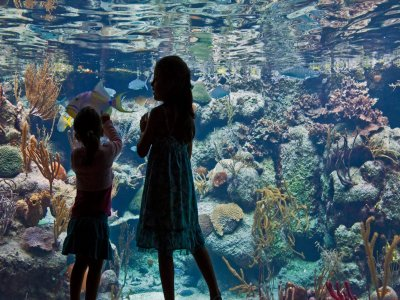 General admission to Xcaret Park price for Children