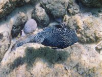 Snorkeling beautiful fish