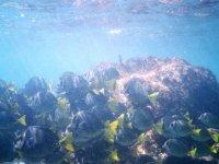 Snorkeling sighting