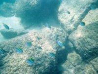Under snorkeling