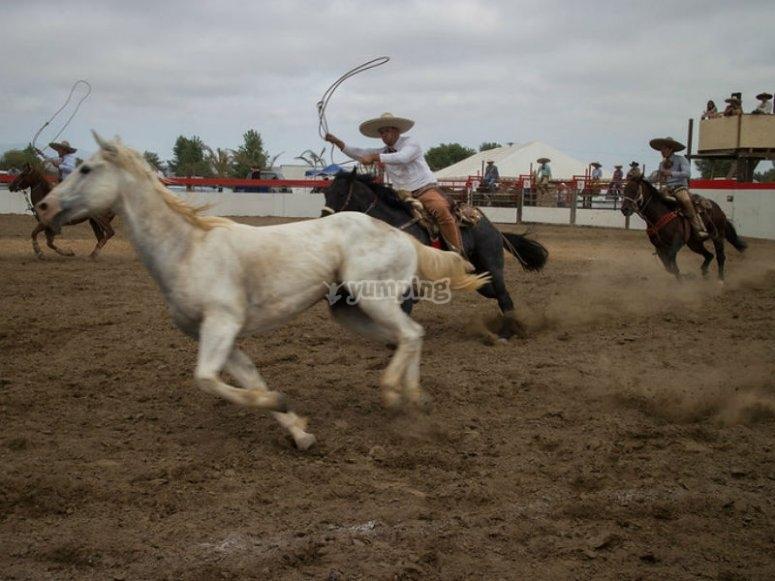 Vive esta experiencia en Guadalajara