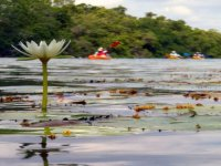 Flower in front of kayaks