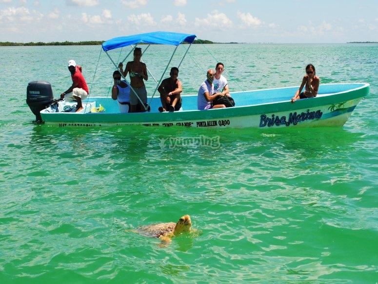 Admira las tortugas