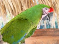 Guacamayas de la zona de aves