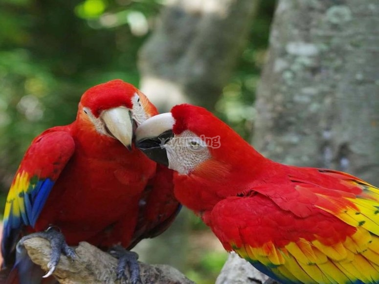 Visit the aviary