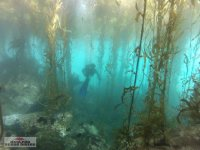 Buceo / diving