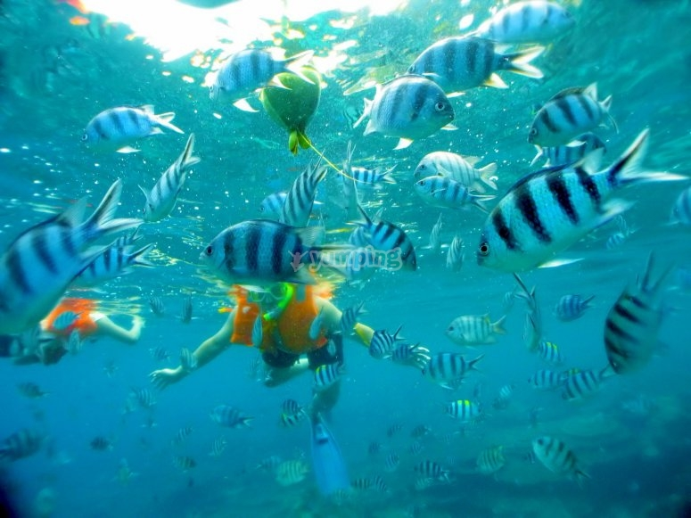 Snorkeling in the caribbean