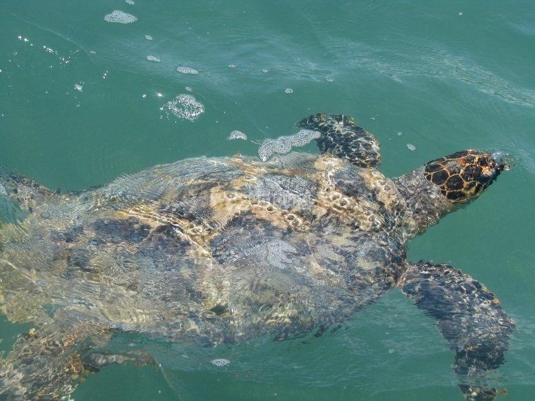 Turtles in sian kaan
