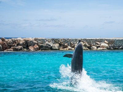 Xcaret Plus and Dolphins interax with transportation