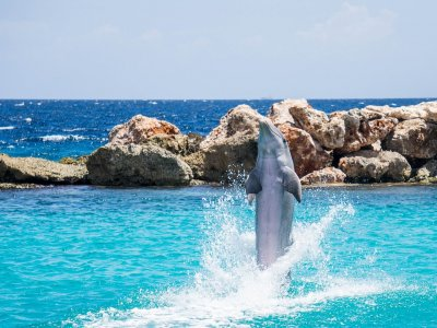Access to Xcaret Plus and Swim with Interax Dolphins