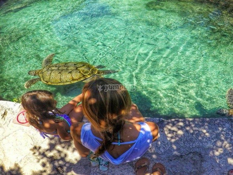 Turtle zone