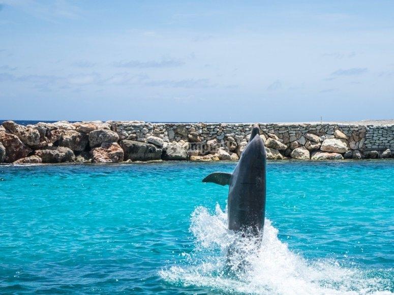 Dolphin tricks