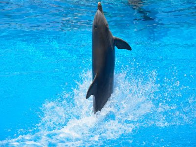 Xcaret Plus and Swim with Dolphins Interax for Children