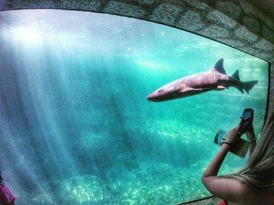 Entrance, Sharks Swim and Buffet at Xcaret Niños