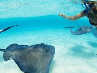 General admission to Xcaret and encounter with stingrays