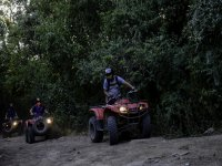 quads through the jungle