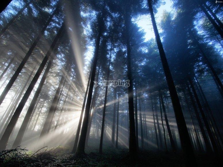 Recorrido por el bosque