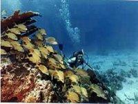 Explore the bottom of the sea