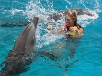 Fun with dolphins