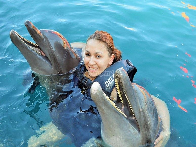 Nado con delfines en zihuatanejo