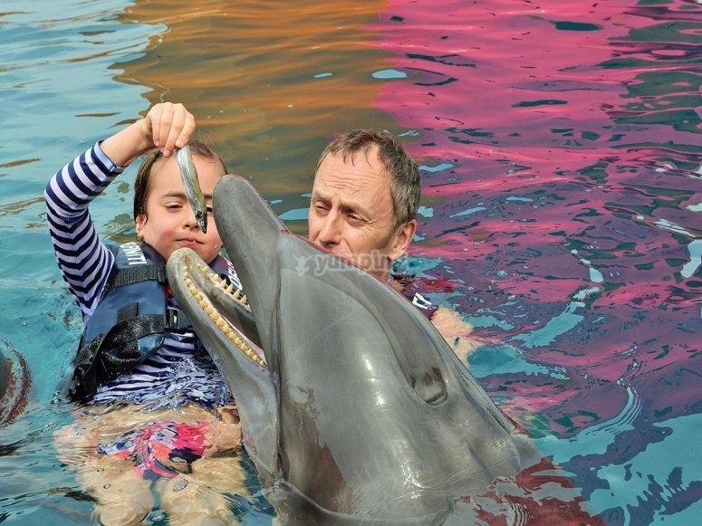 alimentando al delfin