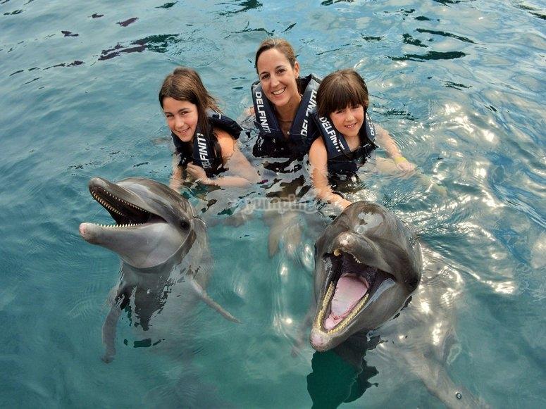 Conociendo a los delfines