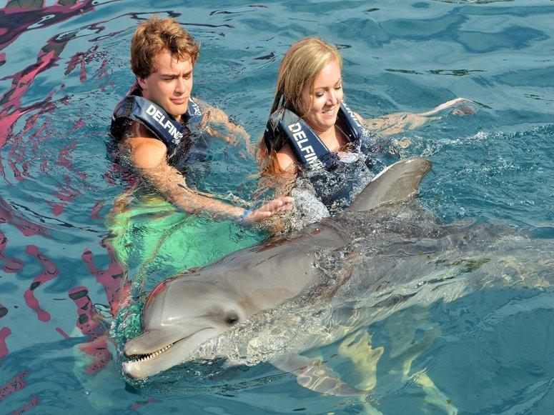 Vistando a los delfines en zihuatanejo