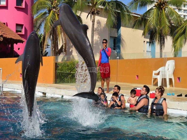 Conoce a los delfines de zihuatanejo