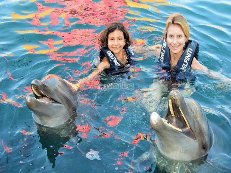 Nada con los delfines en famila