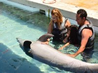Programa familiar de nado con delfines