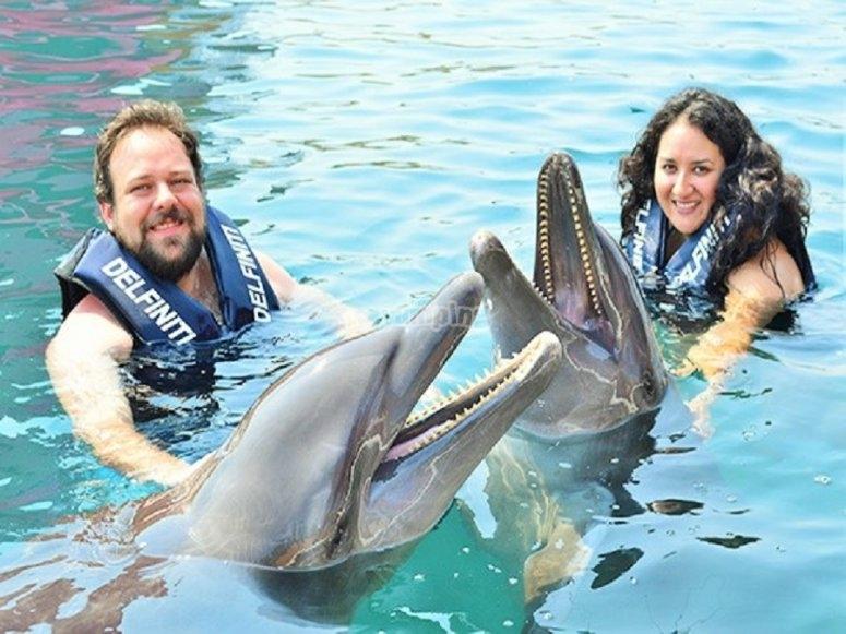 Disfruta del nado con delfines en pareja