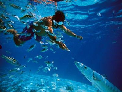Snorkel a Cozumel con trasportación desde Cancún