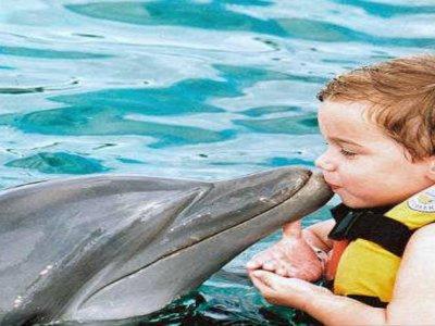 Nado con delfines 45 min Cancún - Pto Morelos