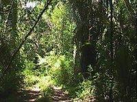 The Oaxacan jungle
