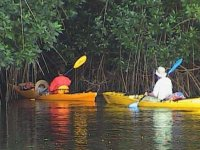 Mangrove kayaking