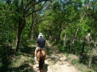 Trails Horseback riding