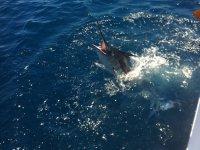 Pescando un pez espada