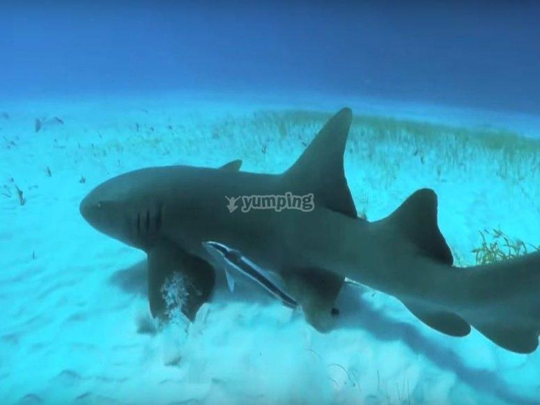 Nada con el tiburon gato