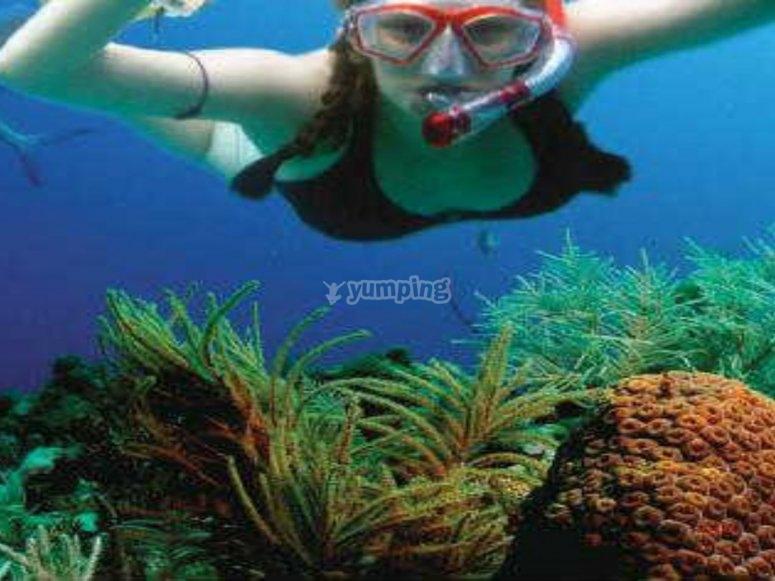snorkel en el arrecife