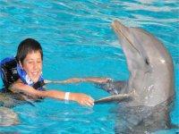 Nado con delfines + entrada a Six Flags Cd México