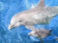 Encuentro delfines Cd de México + parque Six Flags
