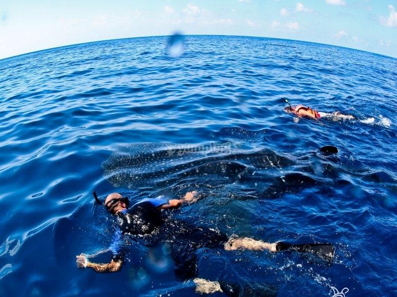 Snorkel en los arrecifes