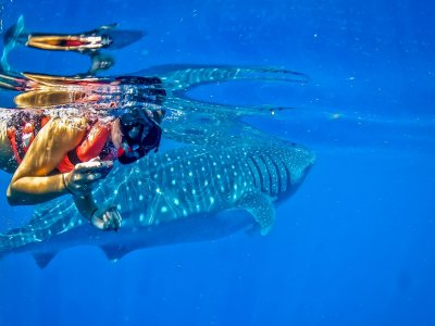 Whale Shark swimming + Lunch. I. Mujeres
