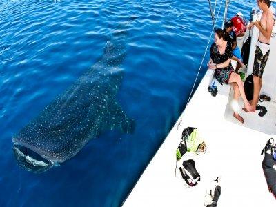 Nado tiburón ballena Isla Mujeres + comida Niños